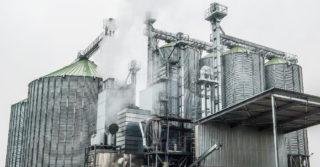 FEERUM rozpoczął suszenie kukurydzy własną metodą