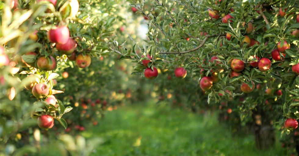 Technologie i automatyzacja sadownictwa kluczem do sukcesu współczesnych gospodarstw