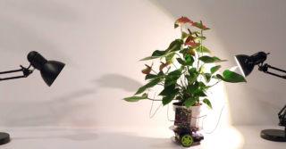 Botaniczny cyborg Elowan – natura, która kieruje robotem