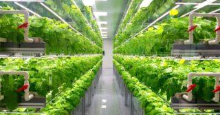 Farmy wertykalne: zielona chemia w sojuszu z nowoczesnym rolnictwem