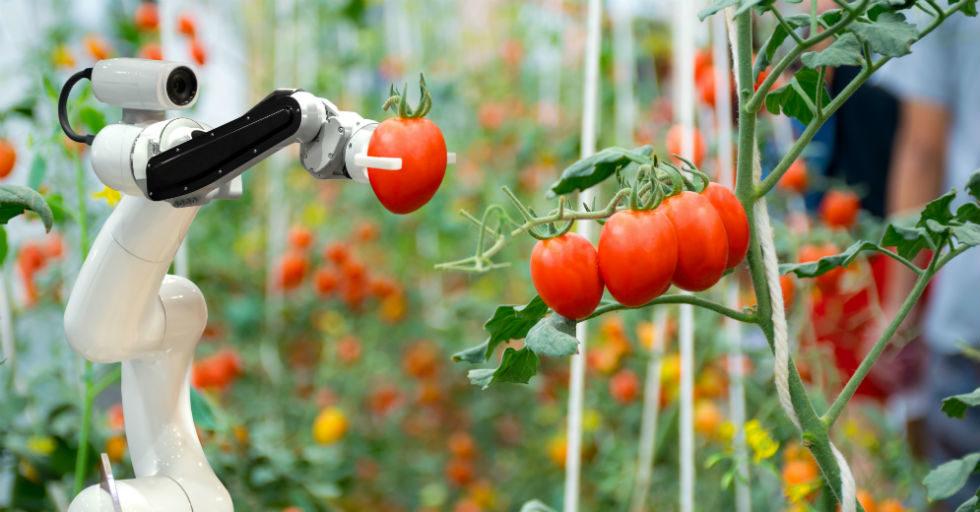 Roboty kluczowym trendem w przemyśle rolniczym