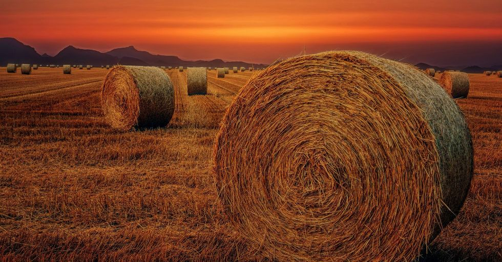 MIT Enterprise Forum Poland i Fundusz AgriTech Hub pomogą polskim startupom z sektora rolniczego