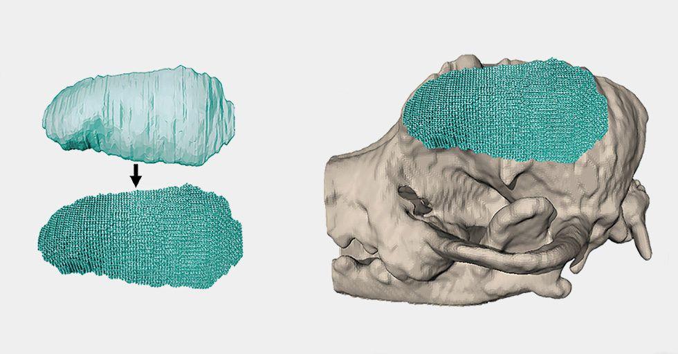 Druk 3D w leczeniu ludzi i zwierząt