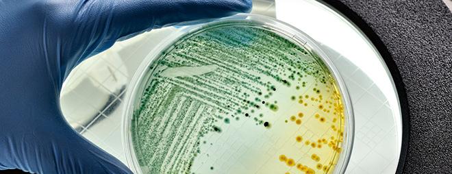 Mikroorganizmy w służbie ekologii